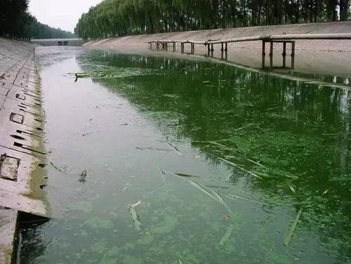 城市黑臭河道如何治理?河道黑臭水体治理思路