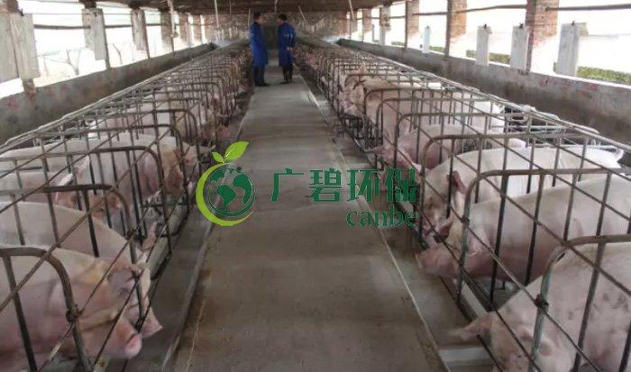 顺德均安畜禽养殖场废水处理案例