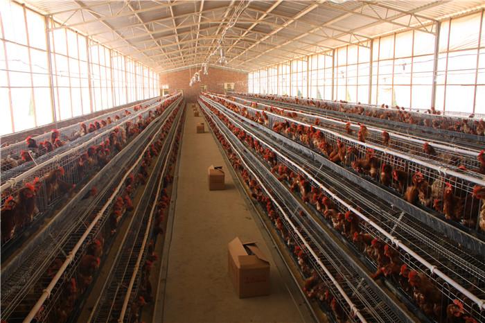 养鸡场污水处理
