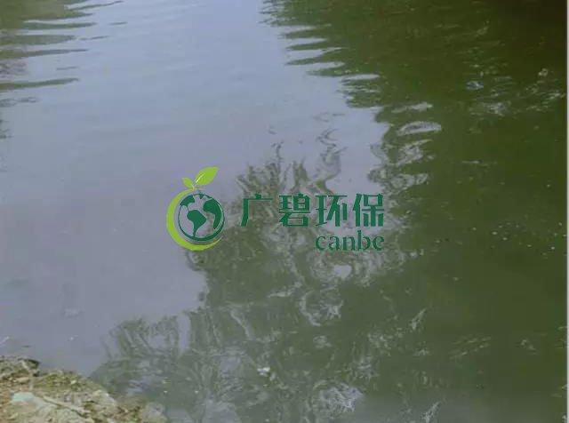 佛山南海黑臭河道生物治理案例