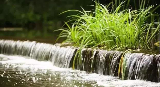人工湿地的新型脱氮途径