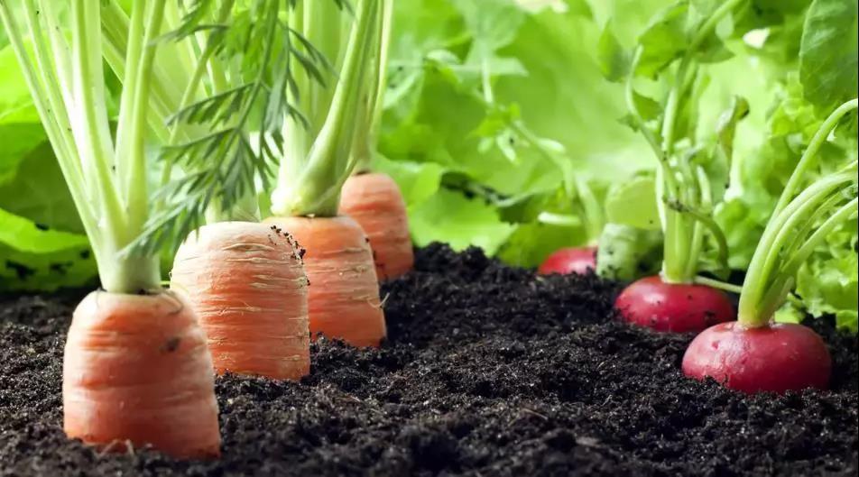 过量施化肥对土壤会造成什么后果?
